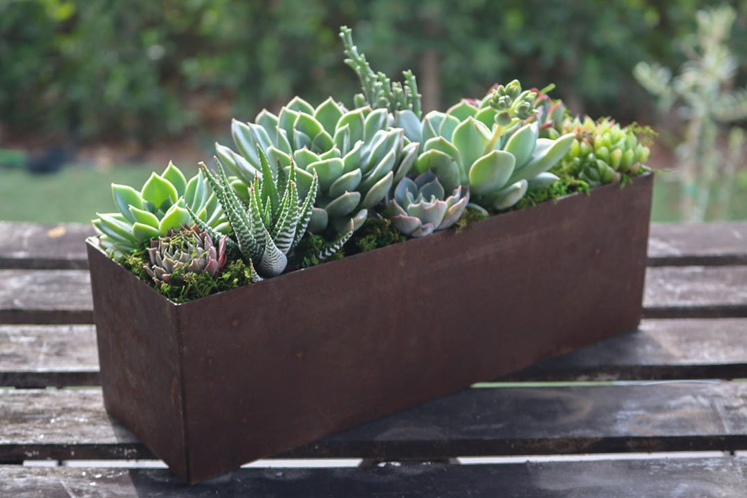 succulent arrangement workshop at appalachian brewing co